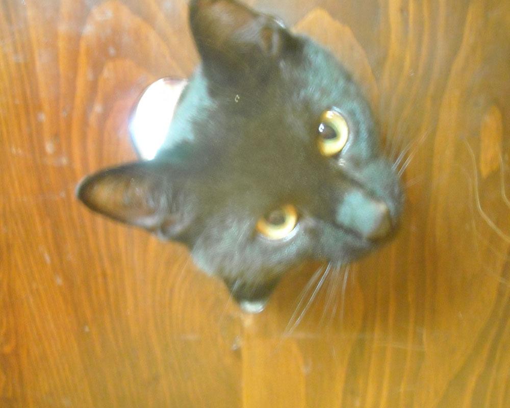 Sheldon the cat